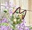 2004.4.112.jpg