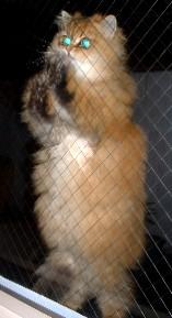 2004.6.3yaseinosakura.jpg