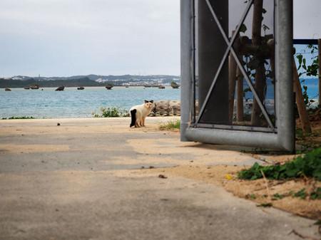 Okinawa38