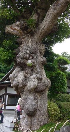 2008628kamakura_040